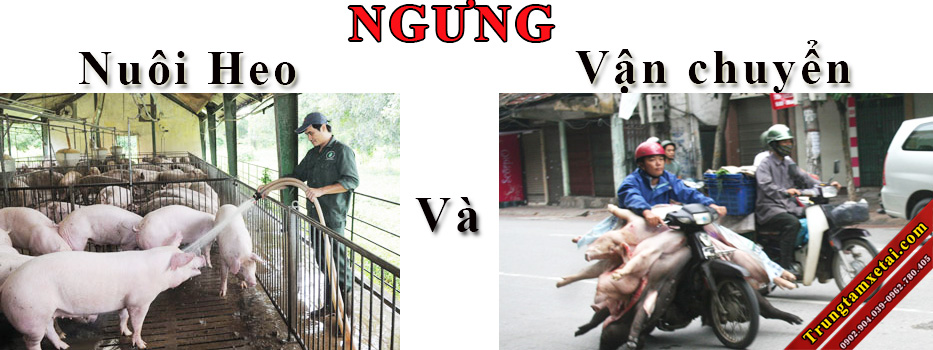 Xe chở gia súc-Xe chở Heo-trungtamxetai.com